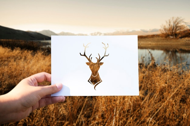 626x417 Moose Antlers Vectors, Photos And Psd Files Free Download