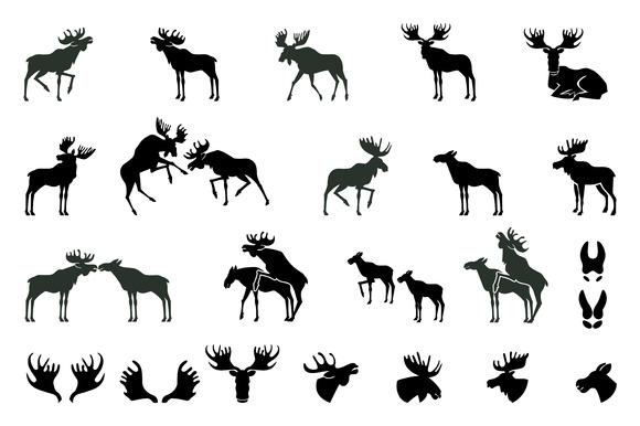 580x386 Moose Antlers Vector