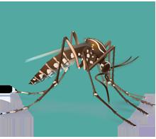 220x197 Integrated Mosquito Management Zika Virus Cdc