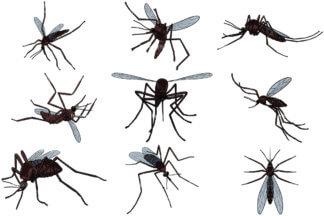 324x216 Killed Mosquito Cartoon Vector Clipart
