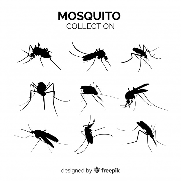 626x626 Mosquito Vectors, Photos And Psd Files Free Download
