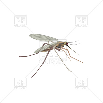 400x400 Mosquito Isolated Vector Image Vector Artwork Of Plants And