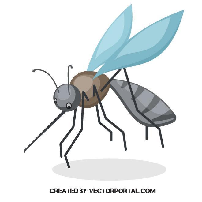 660x660 Mosquito Vector Illustration