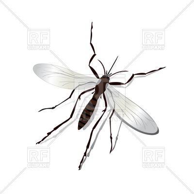 400x400 Realistic Mosquito Vector Image Vector Artwork Of Plants And