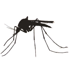 300x281 Upcoming Events Mosquitoes Ecology, Disease Vectors, And
