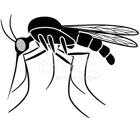 480x440 Vector Mosquito Side View In Black And White Stock Vector