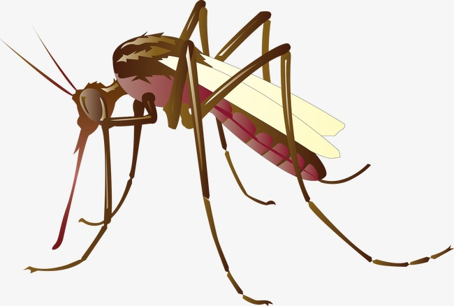 650x438 Vector Mosquitoes, Mosquito, Vampire, Vector Png And Vector For
