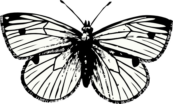 600x362 Free Moth Vectors Free Vector Download (18 Free Vector) For