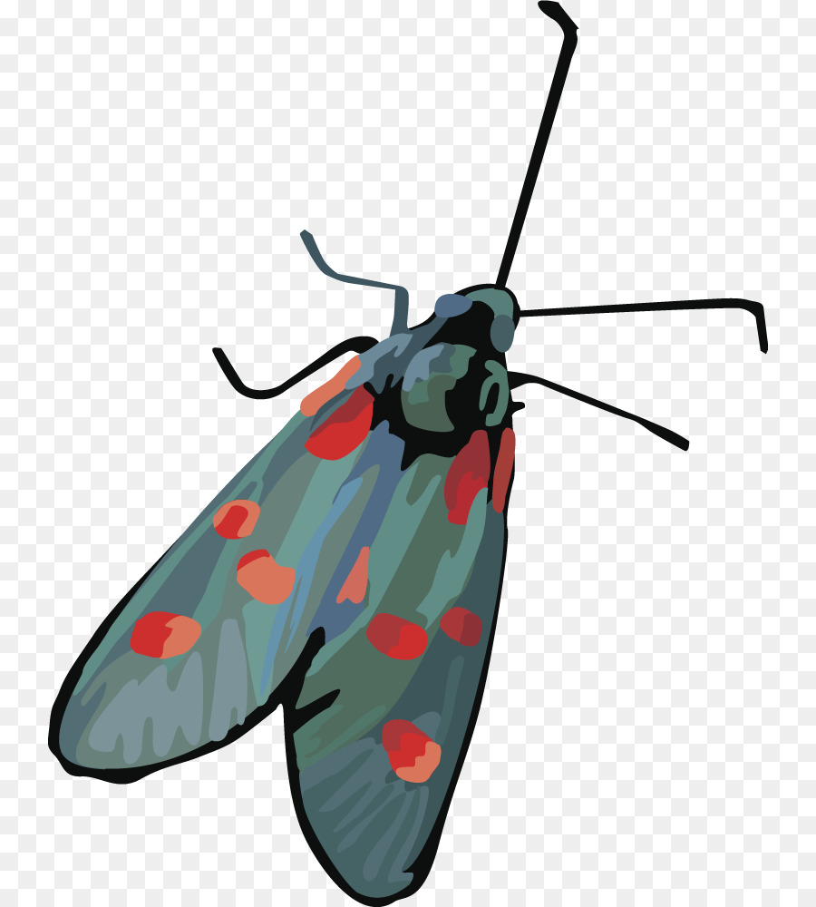 900x1000 Insect Butterfly Moth