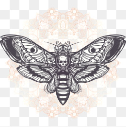 260x261 Moth Png Images Vectors And Psd Files Free Download On Pngtree