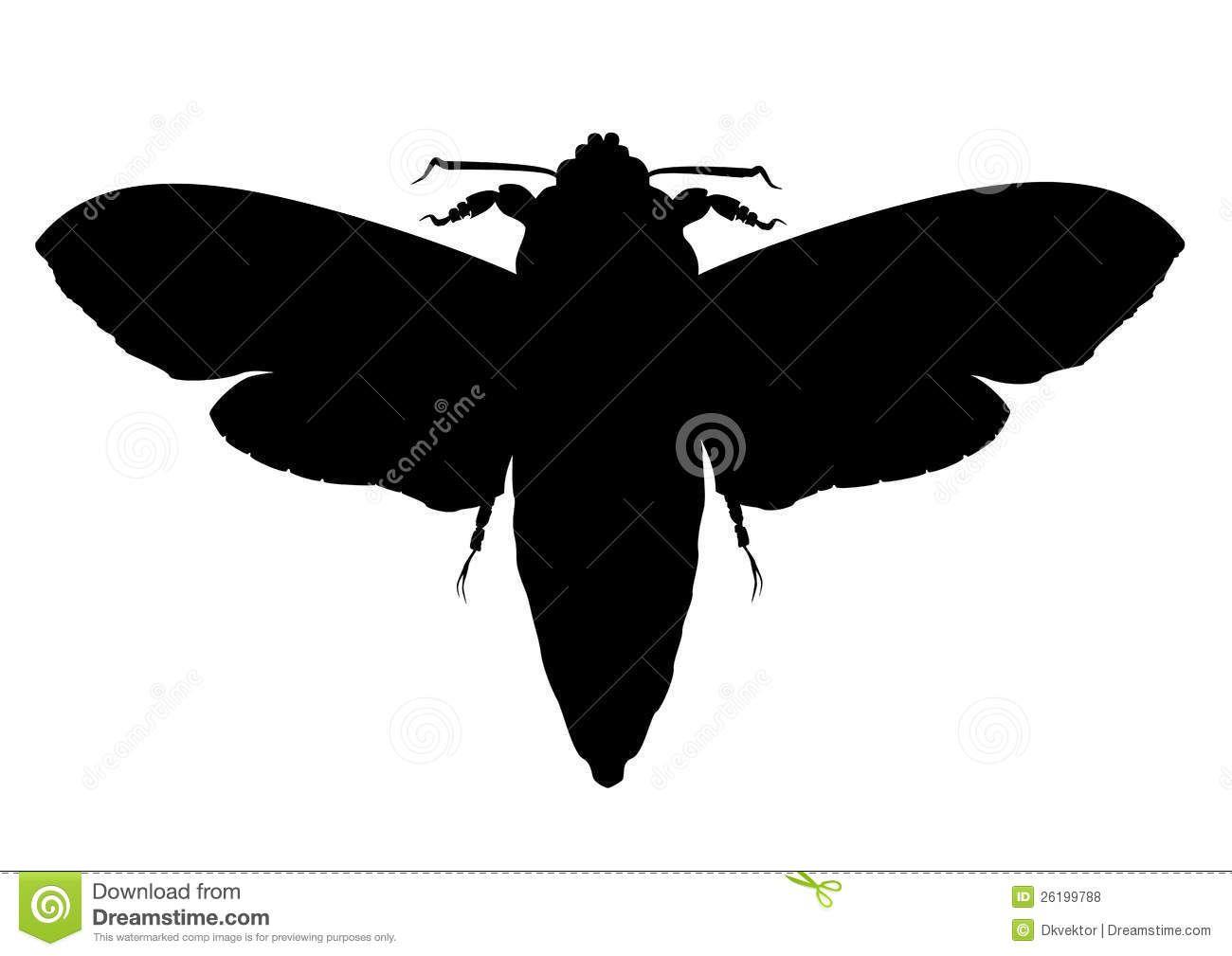 1300x1009 Moth Silhouette