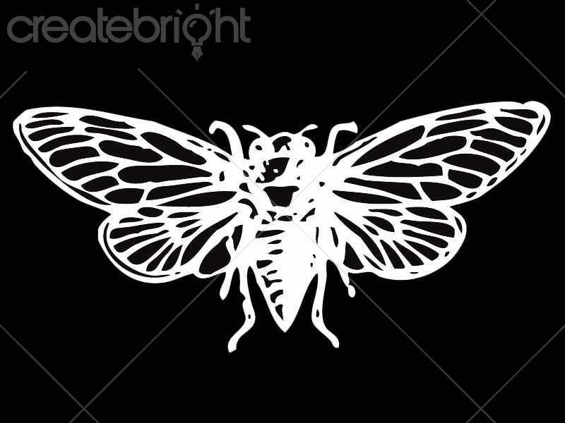 800x600 Moth Vector By Terry Bell In Illustrations Createbright