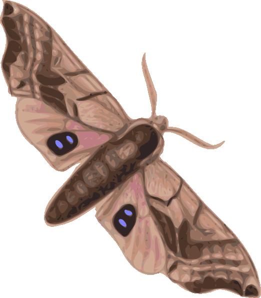 522x595 Moth Clip Art Free Vector 4vector