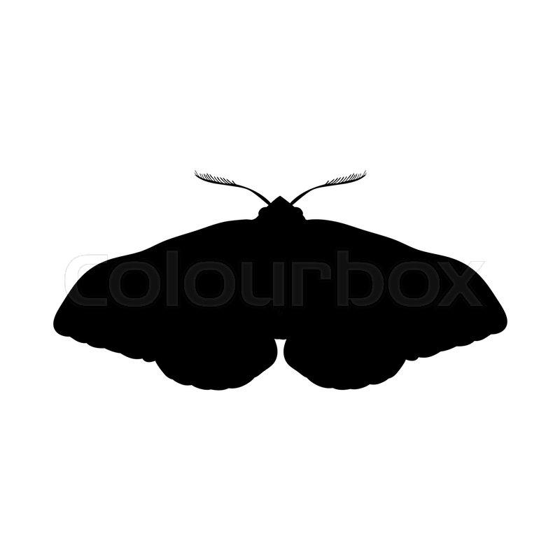 800x800 Moth Insect Black Silhouette Animal. Vector Illustrator. Stock