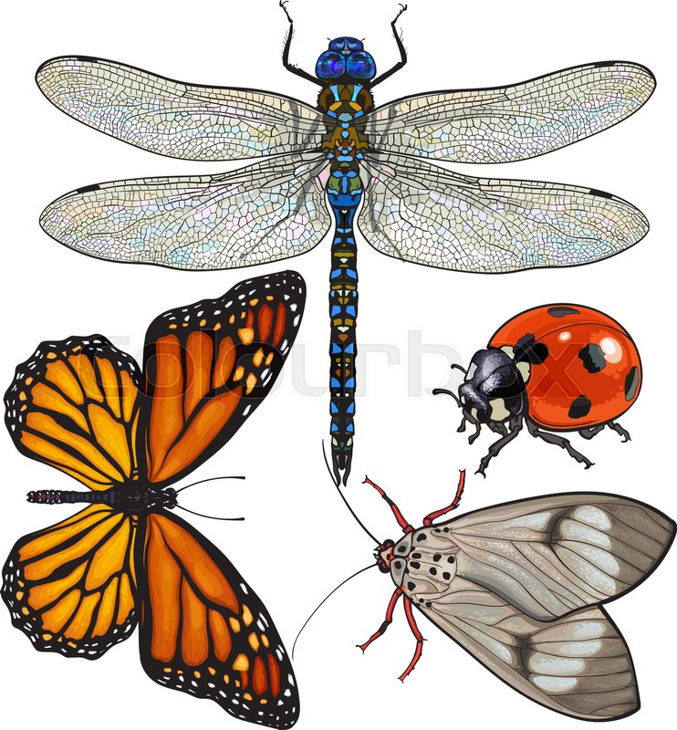 742x800 Set Of Insects Like Dragonfly, Butterfly, Ladybird And Moth