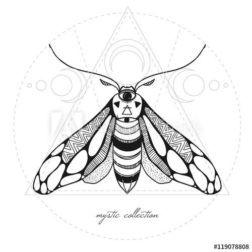 500x500 Mystic Moth Vector Illustration