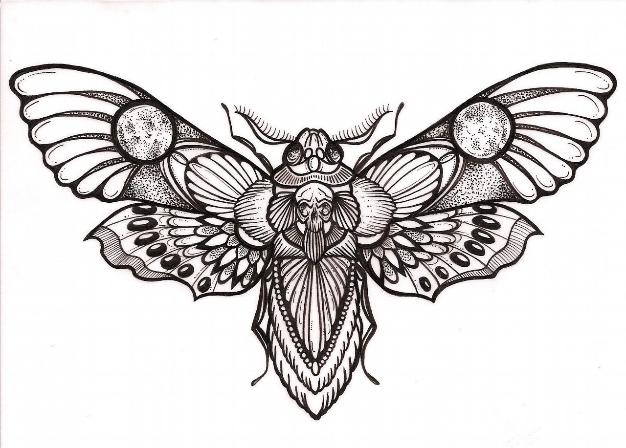 1280x917 Deaths Head Moth Clipart Vector Free Collection Download And