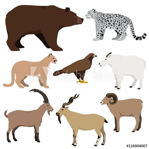 500x500 Vector Set Of Cartoon Mountain Animals. Grizzly Bear, Mountain