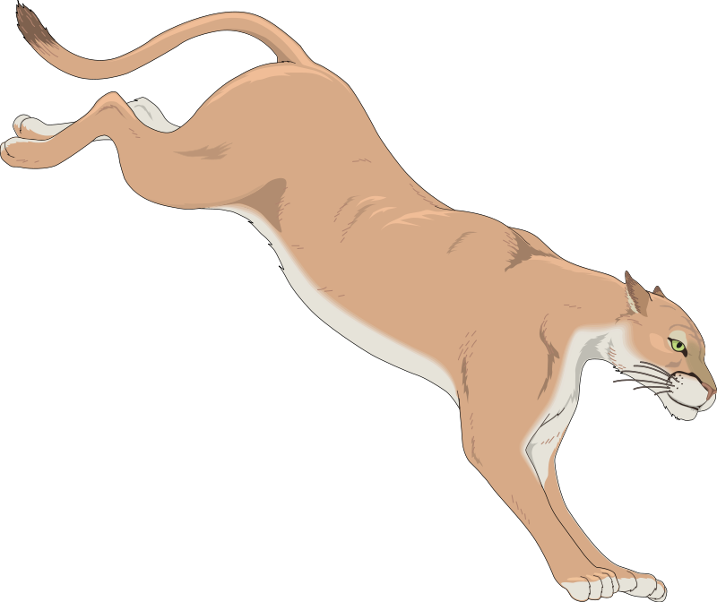 800x672 Mountain Lion Free Vector 4vector