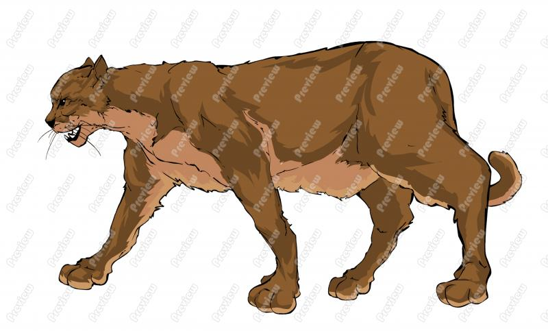 800x483 Mountain Lion Clipart