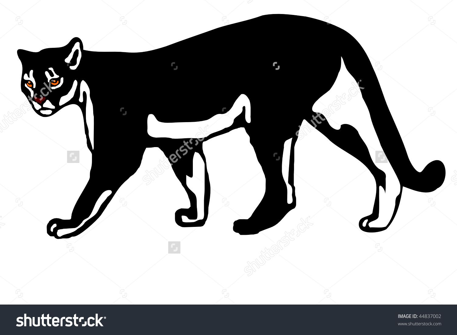 1500x1100 American Mountain Lion (Felis Concolor Coryi) Vector Photostocks