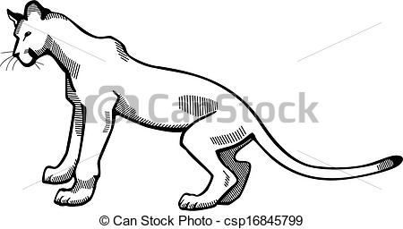 450x256 Puma. Vector Illustration Of A Puma Or Mountain Lion.