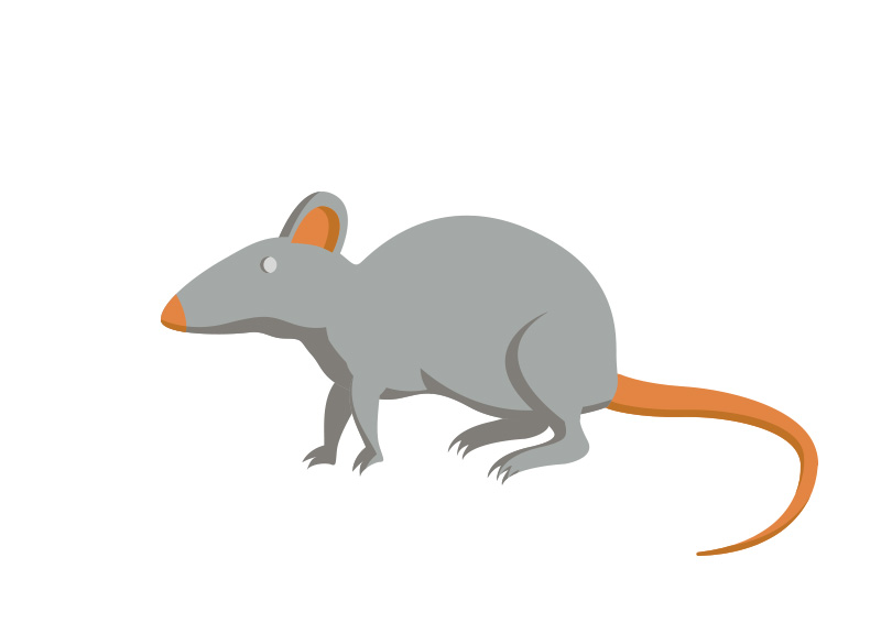 800x566 Free Vector Mouse Illustration