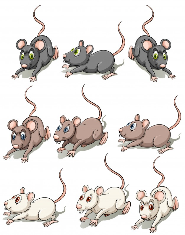 626x795 Mouse Vectors, Photos And Psd Files Free Download