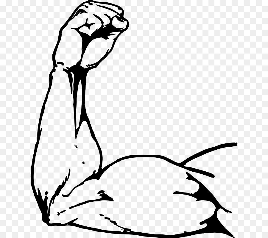 900x800 Muscle Biceps Clip Art