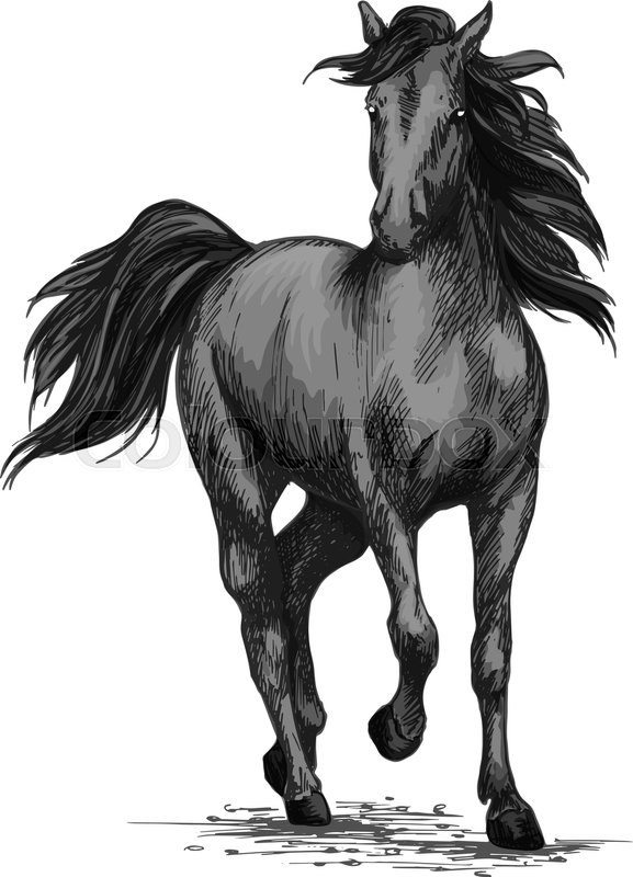 577x800 Horse Racing Or Galloping Vector Sketch. Wild Mustang Running On