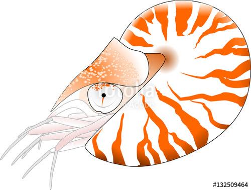 500x378 Nautilus