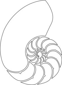 219x298 Nautilus Shell Outline Clip Art