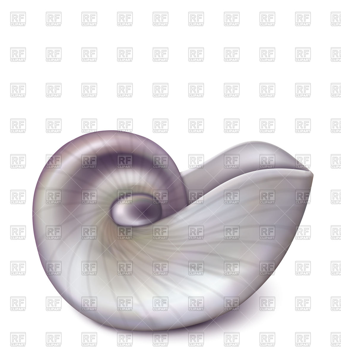 1149x1200 Nautilus Sea Shell Vector Image Vector Artwork Of Plants And