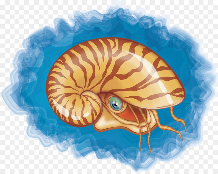 900x720 Chambered Nautilus Seashell Mollusc Shell