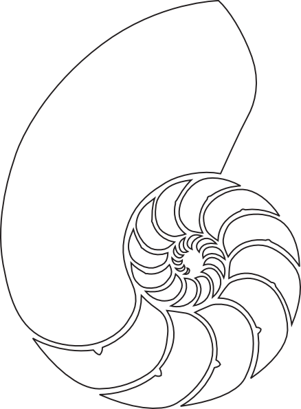 438x595 Shell Clipart Nautilus ~ Frames ~ Illustrations ~ Hd Images