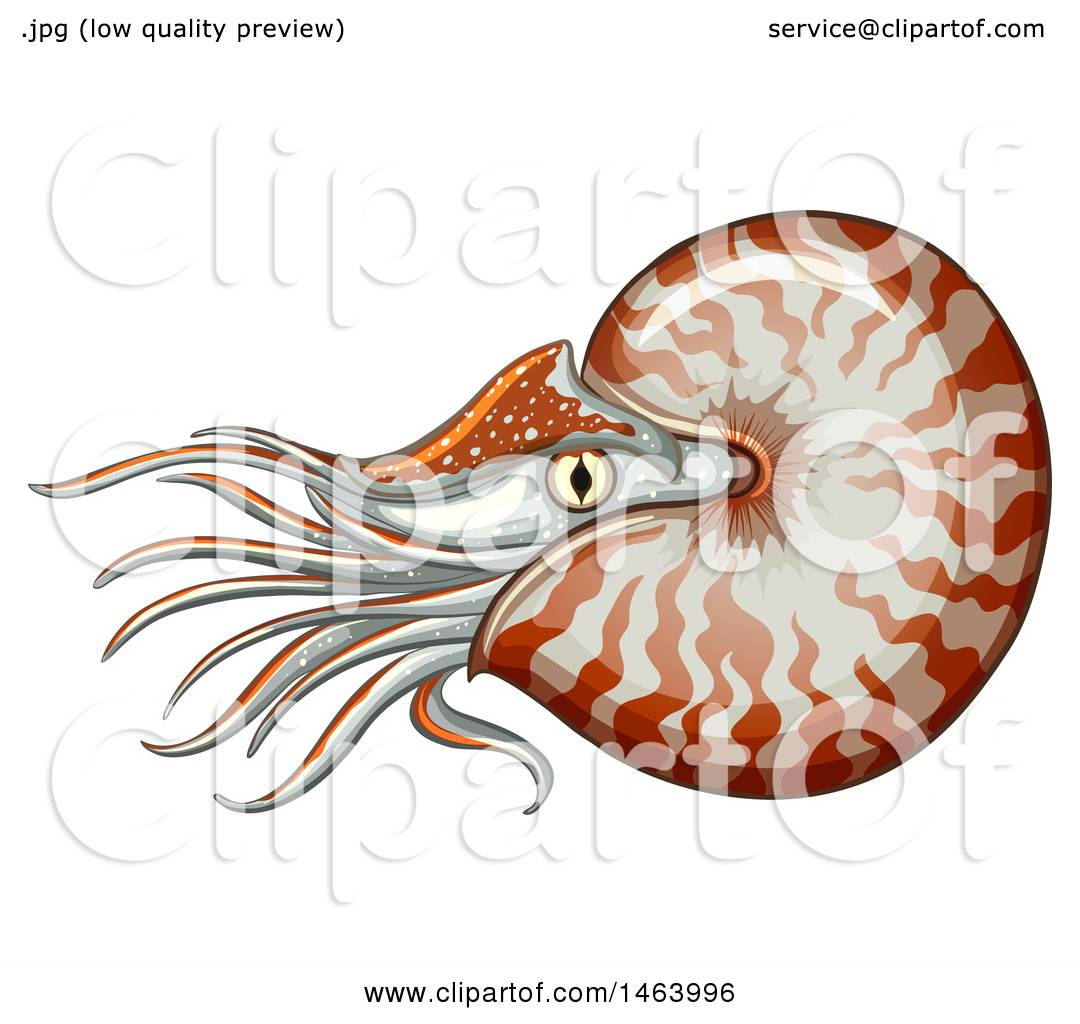 1080x1024 Chambering Clipart