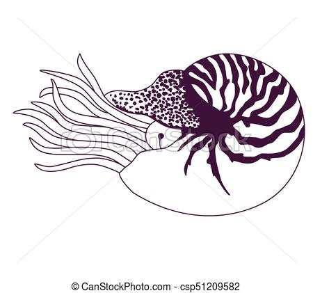 450x421 Collection Of Free Fernticle Clipart Chambered Nautilus. Download