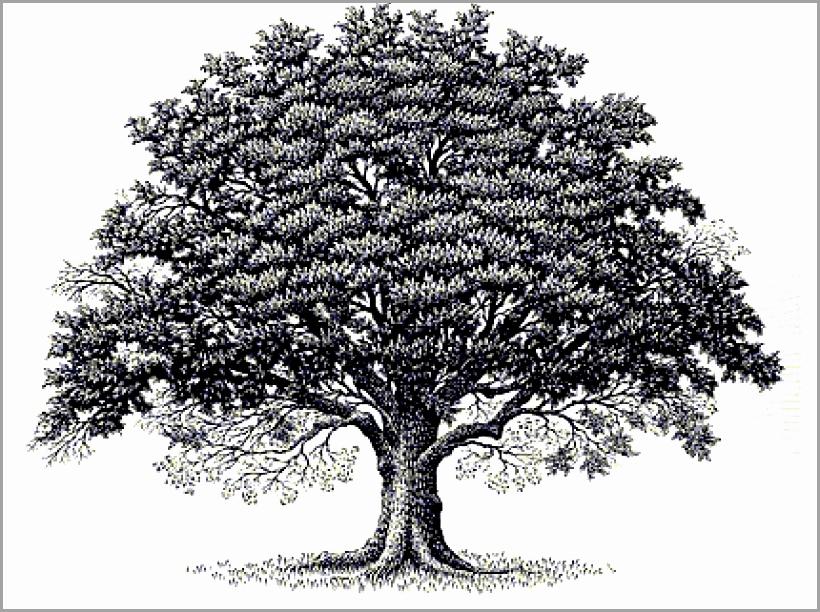 820x612 Oak Tree Free