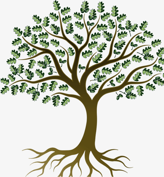 650x702 Oak Tree Png, Vectors, Psd, And Clipart For Free Download Pngtree