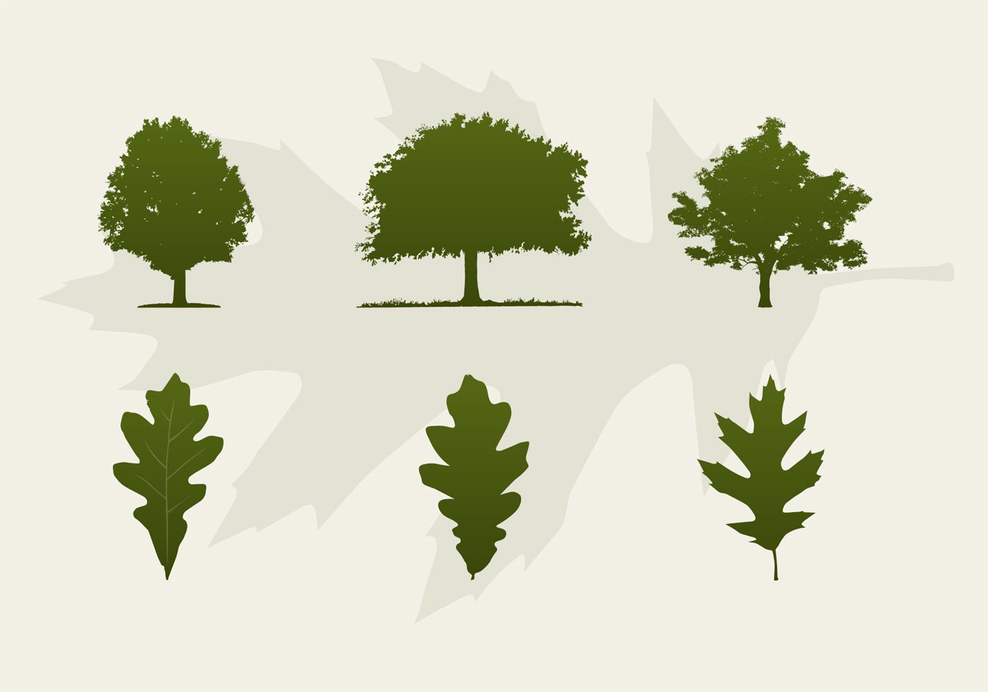 1400x980 Oak Trees And Leaves Vector Silhouettes