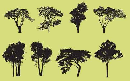 500x314 Tree Vector Free Editable Illustrations To Download
