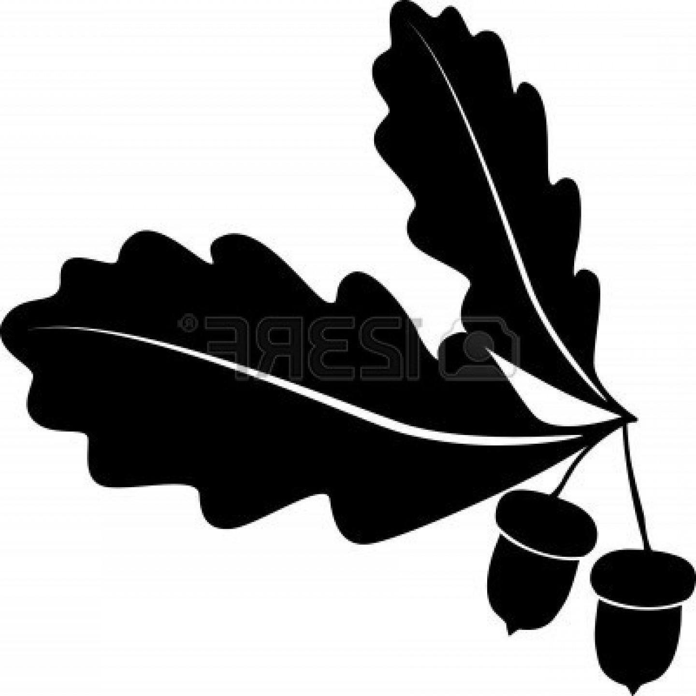 1440x1440 Unique Oak Tree Vector Free Download Acornl Style Images