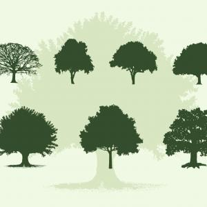 300x300 Various Oak Trees Vector Silhouettes Download Arenawp