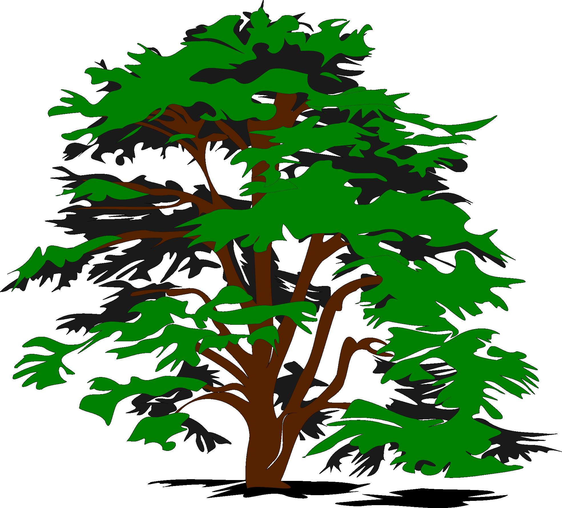 1969x1780 Cute Oak Tree Free Stock