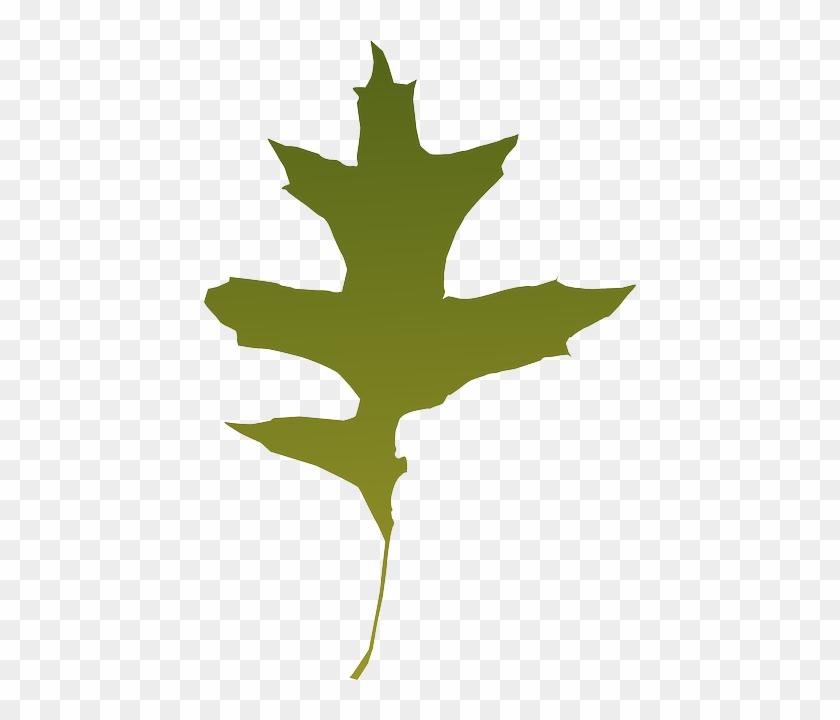 840x720 Foliage, Autumn, Leaf, Nature, Tree, Green, Dry