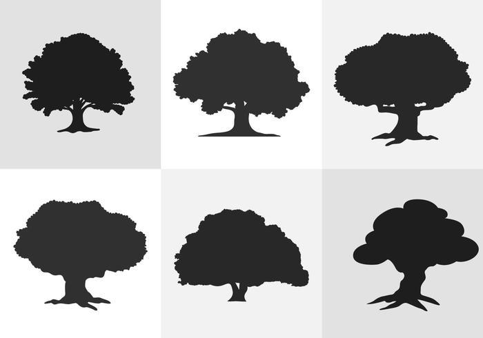 700x490 Oak Tree Silhouette