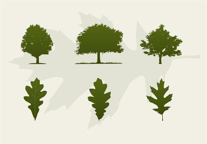 700x490 Oak Trees And Leaves Vector Silhouettes