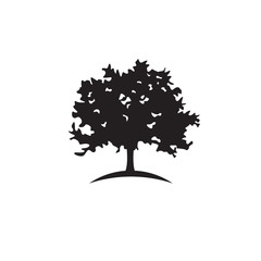 240x240 Search Photos Oak, Tree, Silhouette, Vector, White, Isolated