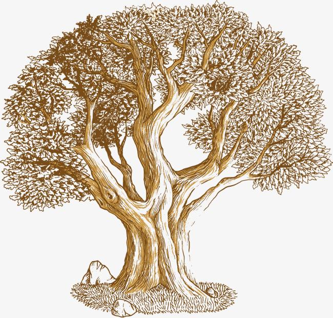 650x620 Vector Oak, Oak, Cartoon Oak, Trees Png And Vector For Free Download