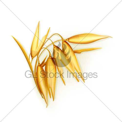 500x500 Oat, Vector Illustration Gl Stock Images